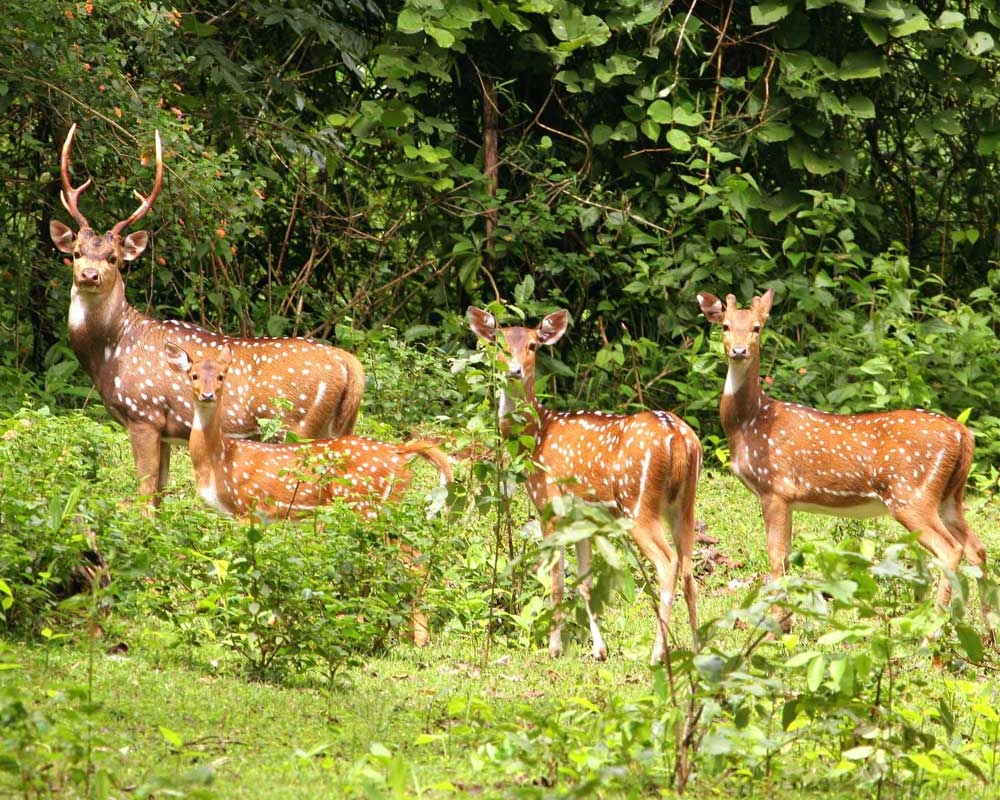 Beautiful animal of Jaldapara Wildlife Sanctuary