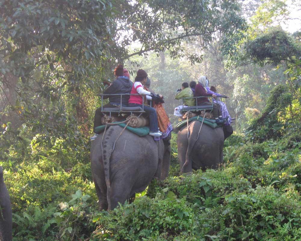 Tourist Enjoy Jaldapara Elephant safari in Winter season