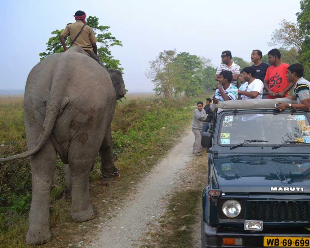 People enjoy to looking at Jaldapara Elephant