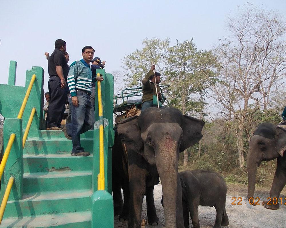 The Famous Jaldapara Elephant safari
