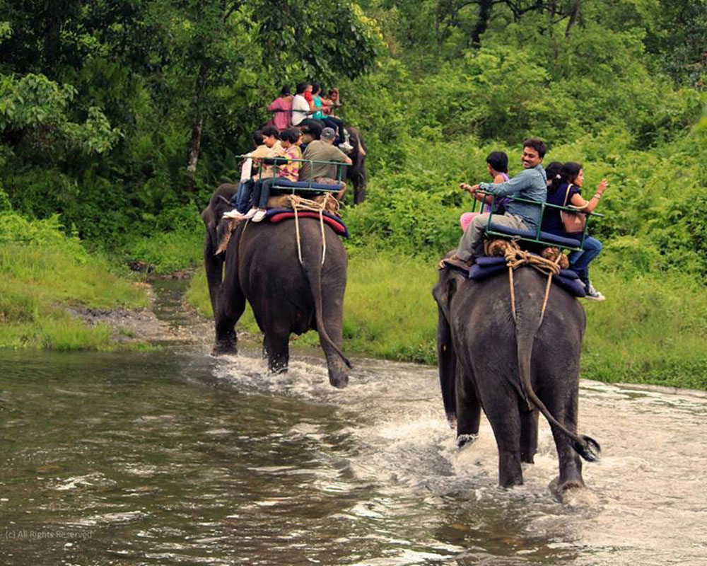 jaldapara-wildlife-elephant19