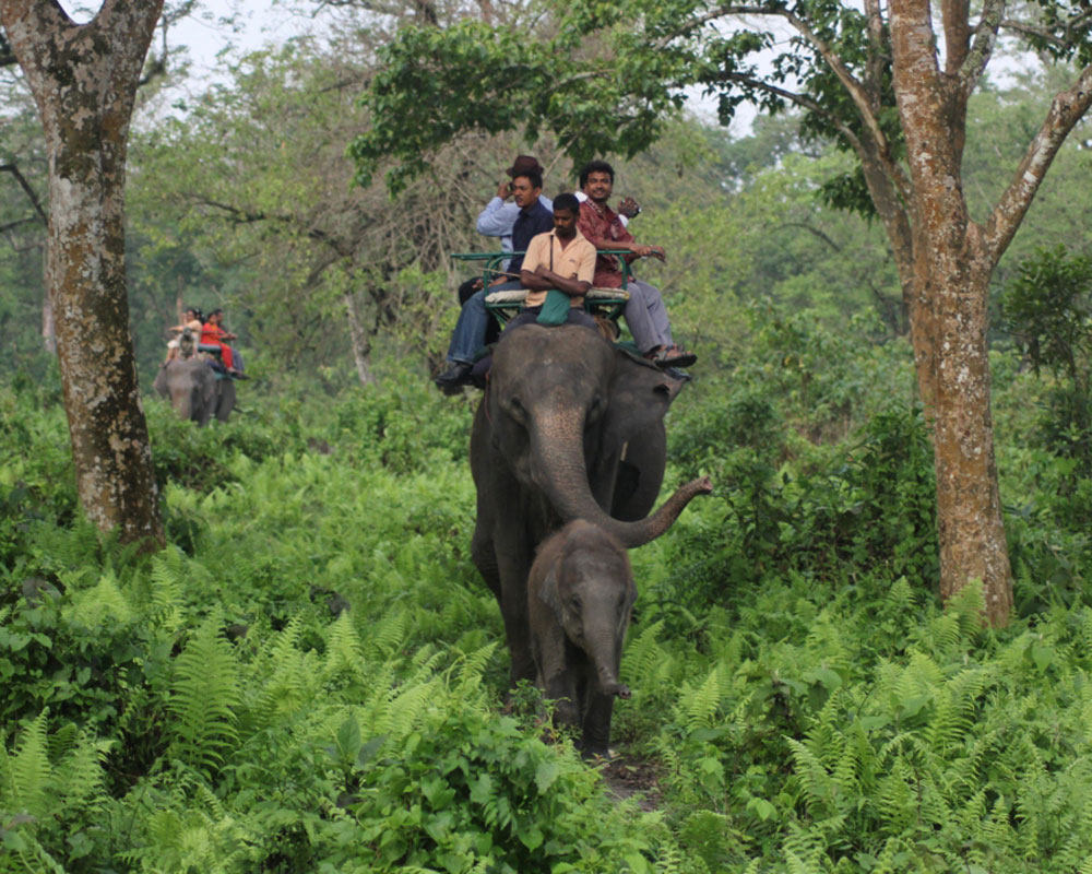 jaldapara-wildlife-elephant21
