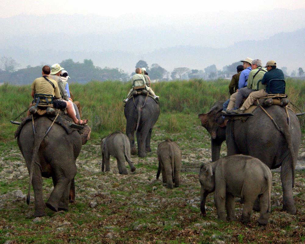 Attractive View of Elephant Safari in Jaldapara