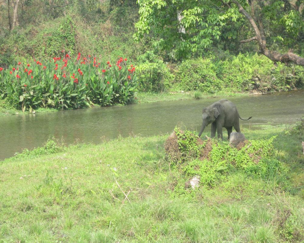 Baby Elephant amidst Jungles of Jaldapara