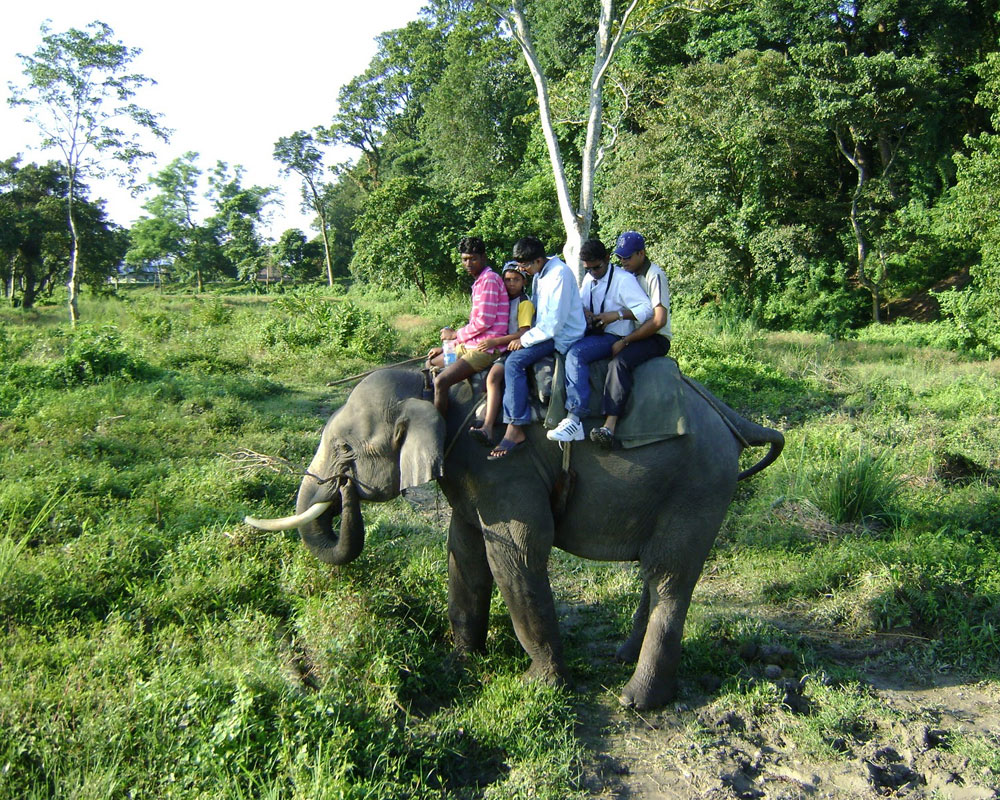Tourist enjoying Elephant Safari in Jaldapara National Park